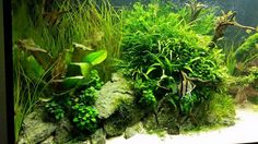 Aquascape by Marcel Witt. Pin by Aqua Poolkoh