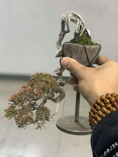 Bonsai Art, Bonsai Garden, Mame Bonsai, Bonsai Styles, Juniper Bonsai, Ikebana, Minis, Greenery, Miniatures