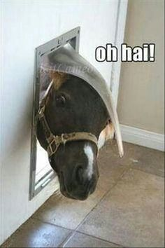 37 Funny Animal Pictures That Will Make Your Day - Horses Funny - Funny Horse Meme - - 37 Funny Animal Pictures That Will Make Your Day The post 37 Funny Animal Pictures That Will Make Your Day appeared first on Gag Dad. Funny Horses, Cute Horses, Pretty Horses, Horse Love, Beautiful Horses, Animals Beautiful, Funny Dogs, Animals Amazing, Majestic Animals