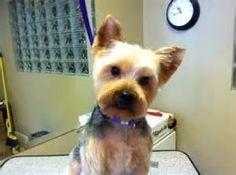 Killer Bichon On Duty Dog Sign Magnet Hook /& Loop Fastener 5x7 Puppy Cut