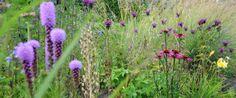 vaste-plantenkwekerij Jan Spruyt - Van der Jeugd bvba (Buggenhout, Belgie)