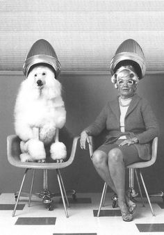 Poodle and senior woman sitting under hair dryers (Digital Composite). Photo by Kendall McMinimy / Getty Images. Original in colour. °