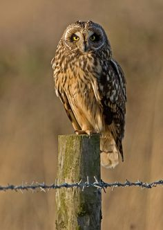 Owl takes command of his post.
