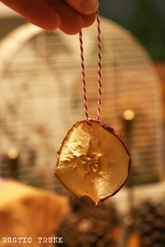 Dried Apple Ornament for Fall or Christmas. With cinnamon sticks.