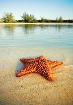 Starfish by Elena Kalis