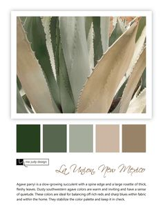 Botanical influence: dusty southwestern agave stabilizes the color palette. (agave-parryi-succulent)