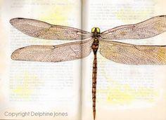 Dragonfly illustration by Delphine Jones