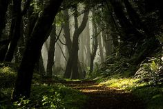 Enchanted Forest in Lincoln City Oregon