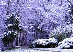 Snow...winter wonderland #photography
