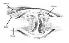 Bursitis, tendinitis y otros síndromes reumáticos de los tejidos blandos