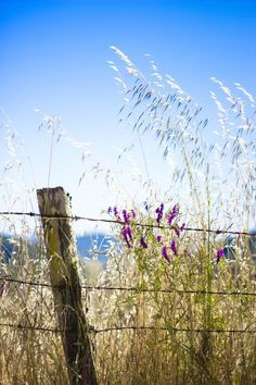 "oldfarmhouse: ""Fine Spring Day """