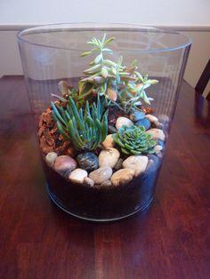 Succulent Terrarium! (do you see the turtle?)