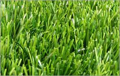 Why should an Astro Turf Constructed in to Schools? Artificial Grass Carpet, Artificial Turf, Drainage Channel, Astro Turf, Wheat Grass, Park Avenue, Best Location, Lawn Care, Herbs
