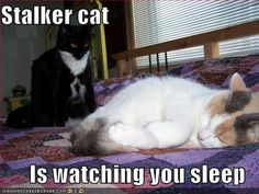 stalker cat is watching you sleep
