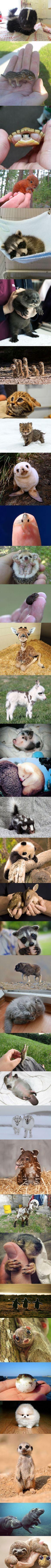 Bebé lindo de recogida de animales!