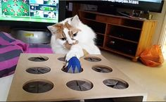Daily Cute: Cats Are Mesmerized by Whack-a-Mouse Toy-video
