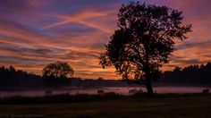 Trees in orange sunset on purple foggy meadow - Took this picture and the ones to come in the next days on my way back from Celle to Cloppenburg near the river Aller in a small town called Winsen, Lower Saxony, Germany in autumn 2015.  When I saw. that colors in the sky I had to take some shots with the Sony Alpha 6000 which I just had newly bought then.  Hopefully you enjoy the picture as much als I did taking them.
