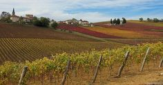 Gaillac 03 | Flickr - Photo Sharing!