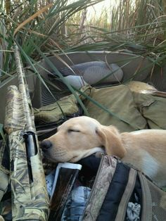 Good ol' hunting dog, sleeping on the job. A hard worker deserves a good nap!