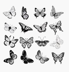 butterfly illustration black and white - Buscar con Google