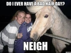 Bahaha - Adorable Horse! No bad hair day ;) | Animals Zone