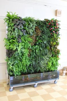 Here is an idea for a vertical garden plus a fish tank.