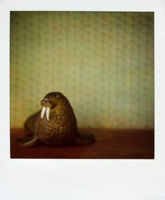 walrus | por esoule [The Little Zoo - Polaroid images shot with an SX-70 camera]