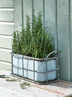 Add a little industrial style to your outdoor space with our caged trough planter. Ideal for your indoor or outdoor space, our aged zinc effect planter includes two handles and a watertight planter ideal for filling with herbs, flowers or plants.