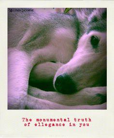 The monumental truth Of elegance in you by MileniaLicorne.deviantart.com on @deviantART #husky #dog