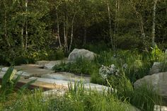 A Surprise Gold Medal at the Chelsea Flower Show - Gardenista Woodland Garden, Garden Landscape Design, Landscape Architecture, Chelsea Flower Show, Private Garden, Shade Garden, Outdoor Gardens, Modern Gardens, Small Gardens