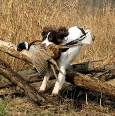 Top 10 Hunting Dog Breeds |The Cozy Pet Blog