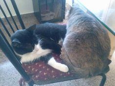 La Lazy y la Sigrid descansan placidamente. Tremendo el lomo.que tiene la Sigrid! Ja, ja, ja...
