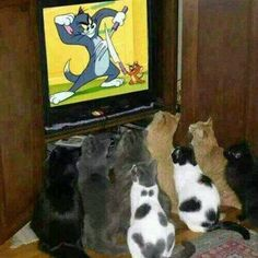 Cats watching Tom & Jerry *