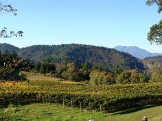 Trip Advisor's Top Wine Tours in the US