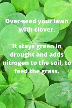 Cheap and Easy Lawn Fertilizer Tip