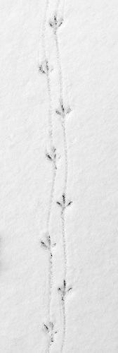 Winter wonderland | Footprints in the snow