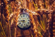 Harvest time - null