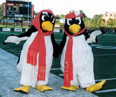 Youngstown State University Mascot Pete and Penny. It's just like having a DUCK as a mascot! I will feel right at home! Penguin Life, Penguin S, Canfield Ohio, Youngstown State, Akron Zips, West Liberty, Cartoon Birds, Valentines Day Couple, Ohio Usa