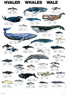 Scandanavian Fishing Year Book - Classic Posters - Whales and Doplhins