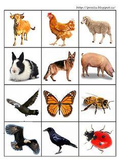 Pro Šíšu: Kde ziji zviratka Activities For 1 Year Olds, Preschool Learning Activities, Kindergarten Science, Toddler Learning, Animal Pictures For Kids, Farm Unit, Card Games For Kids, Montessori Education, Cartoon Art