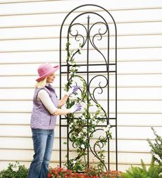 Scroll Finial Trellises. http://plowandhearth.com/scroll-finial-trellises_p12496.html