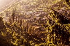 Surrounded by Greens... Photo by Abhishek Chaudhary — National Geographic Your Shot