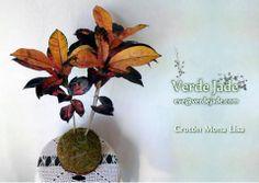 Kokedama Crotón  Consultas: eve@verdejade.com  www.VerdeJade.com