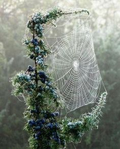 Spider web on a frosty morning. The beauty of nature!