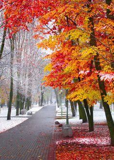 Yes, it snowed overnight in Toronto! Photo Background Images, Photo Backgrounds, Beautiful Nature Wallpaper, Beautiful Landscapes, Fall Pictures, Nature Pictures, Autumn Photography, Landscape Photography, Photography Photos