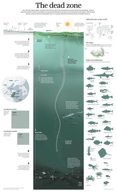 An analysis about the dead zones in Yellow Sea. Infographic for South China Morning Post.