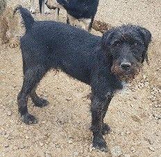 Tiere In Not Seite Hunde Aus Rumanien Pet Adoption Dog Adoption Dogs