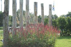 Border met persicaria ,grassen en strandpalen om inkijk te verminderen maar zichtlijn niet helemaal af te sluiten. Ontwerp Trendtuin