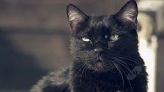 Top 10 best cat commercials https://www.youtube.com/watch?v=8XWZZsGhz4Q