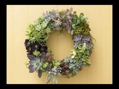 How to Make a Living Succulent Wreath - Succulents and Sunshine